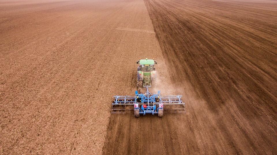 Lignin-Anbau steht in Konkurrenz zur Lebensmittel- und Futterindustrie