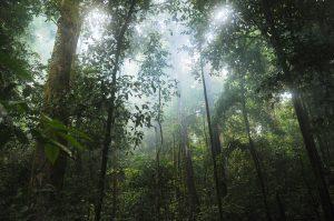 Regenwald - Lignin, das in jeder verholzenden Pflanze vorkommt, ist einer der verfügbarsten Rohstoffe auf der Erde