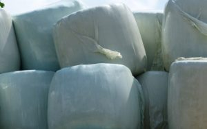 Silage in Plastik verpackt