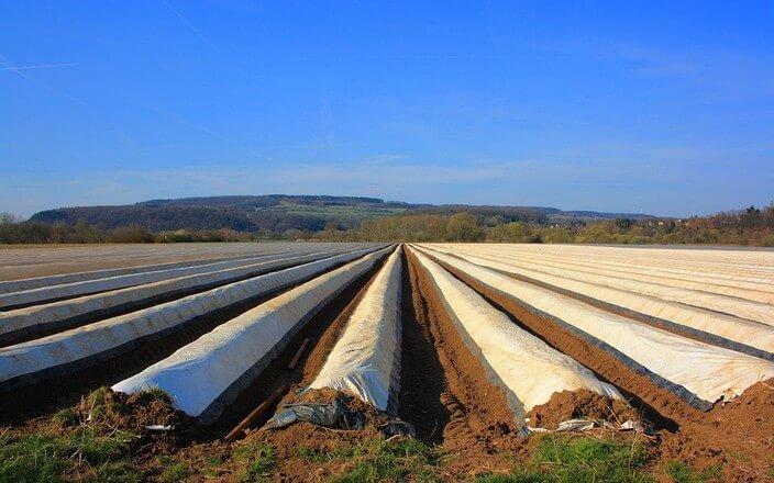 Mulchen auf Feld für Spargelanbau