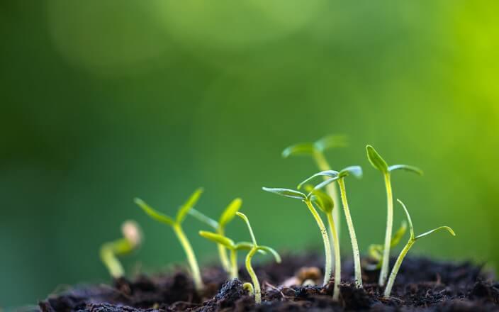 Aus Kompost entsteht Humus, der neuen Pflanzen wertvolle Nährstoffe für das Wachstum liefert.