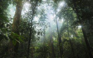 Regenwald: Aufforstung zur Verschiebung des Earth Overshoot Day