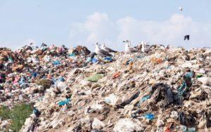 Möwen sitzen auf Berg bestehend aus Plastikmüll