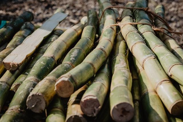 Plastikalternativen Bambus