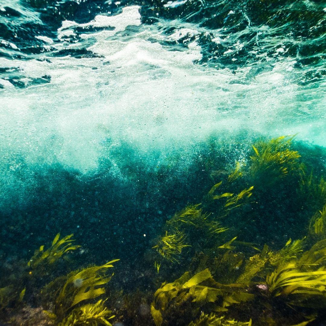 Bundestagswahl Meeresschutz